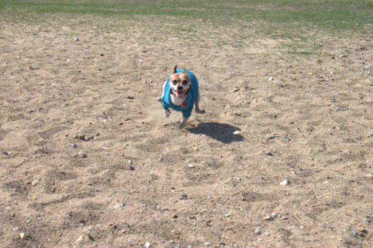 Run Ponie Run