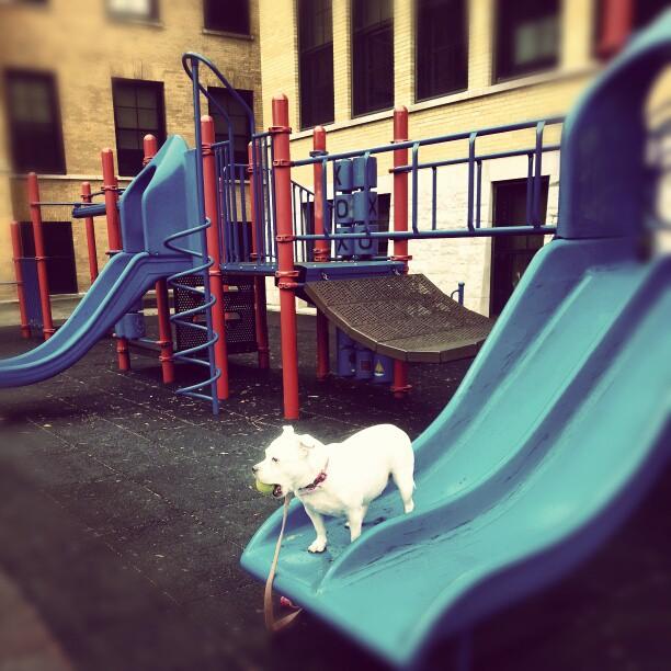 ...Dog Slide?